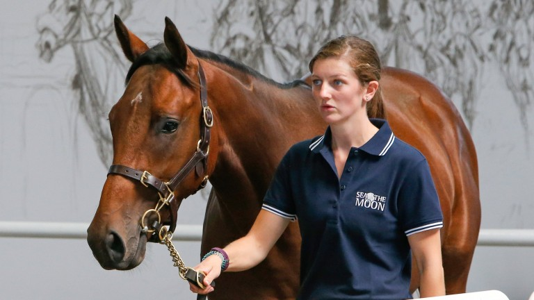 The Sea The Moon colt that fetched €460,000 from Blandford Bloodstock on behalf of Godolphin