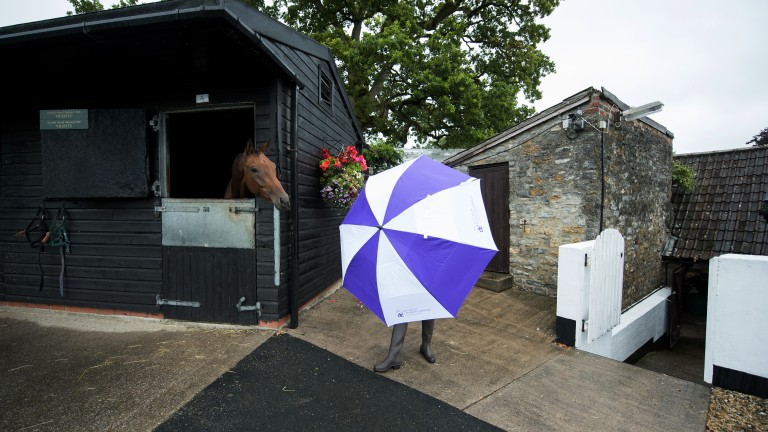 Purple rain: dual Scottish Grand National winner Vicente takes an interest in a bright umbrella