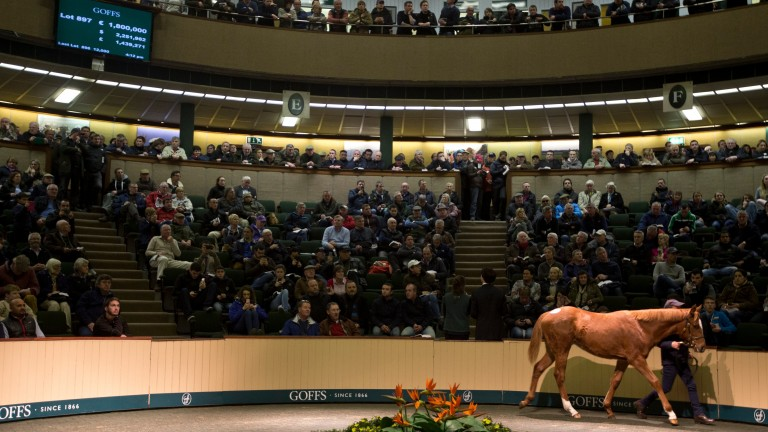 La Figlia when selling in the ring at the Goffs November Foal Sale in 2014