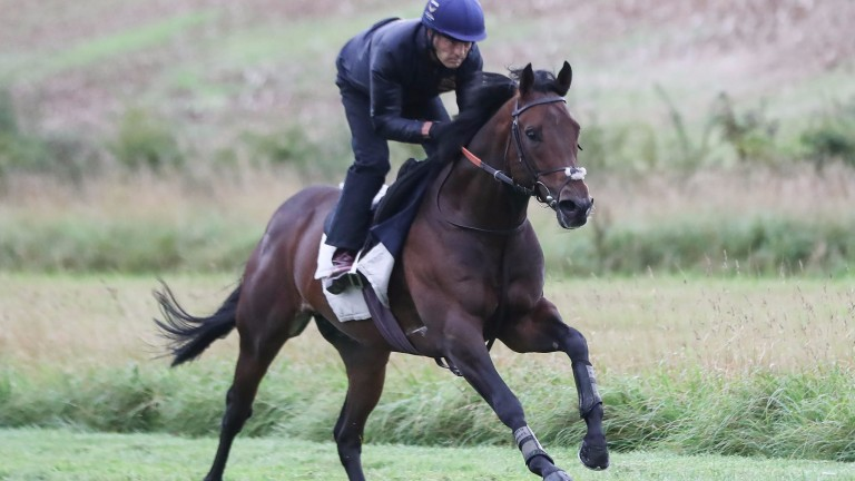 Harry Angel canters under Kevin Harris at Clive Cox's yard on Tuesday morning