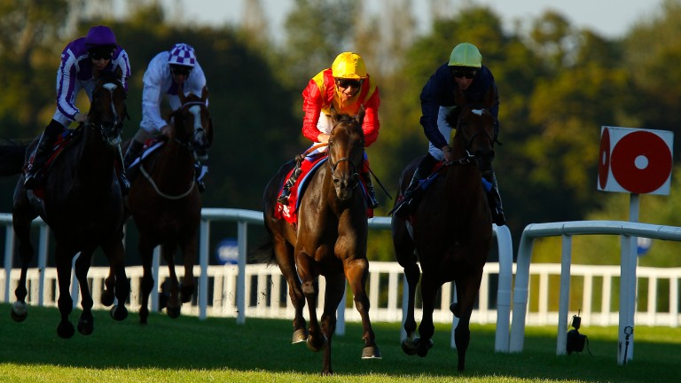 Shining light: Snow Fairy leaves her rivals in the shade as she wins the 2012 Irish Champion Stakes