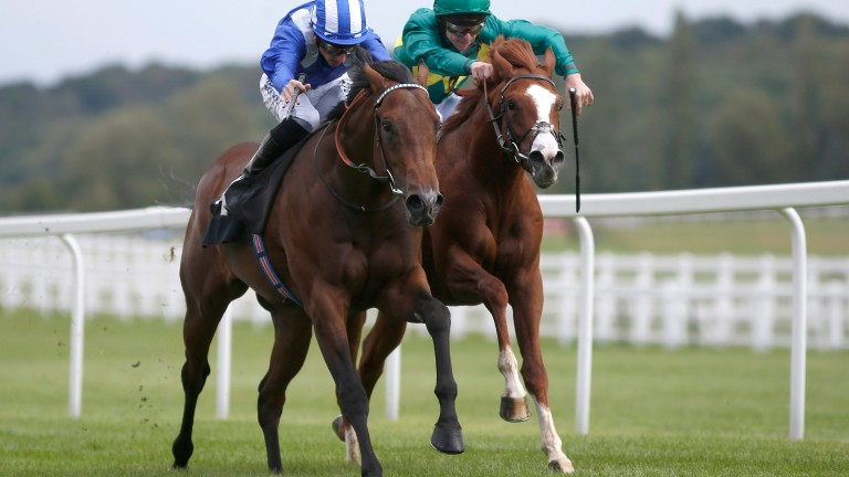 Musawaat: heads to Ascot in search of a third career victory
