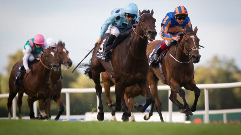 Almanzor: the top-class colt's Frankel half-sister debuts on Monday