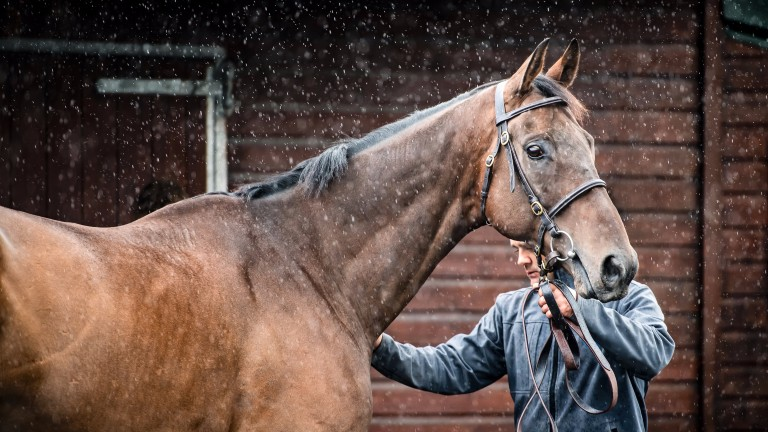 Autumnal rain signals a change of scene for the animals changing hands at Doncaster on Wednesday