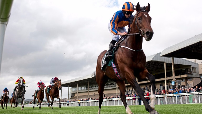 Churchill: seen here winning the Goffs National Stakes at the Curragh last year