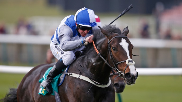 Eminent will bid to give his sire a first European Group 1 winner when lining up in the Irish Champion Stakes
