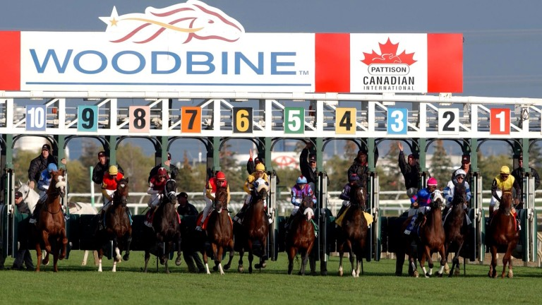Woodbine: scene of tragedy on Friday