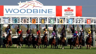 Woodbine racecourse: exercise rider died of injuries