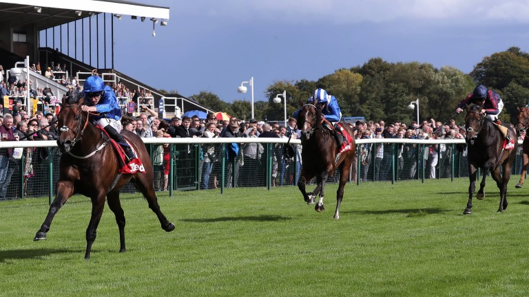 League of his own: Harry Angel proves far too good as he motors clear to win the Sprint Cup