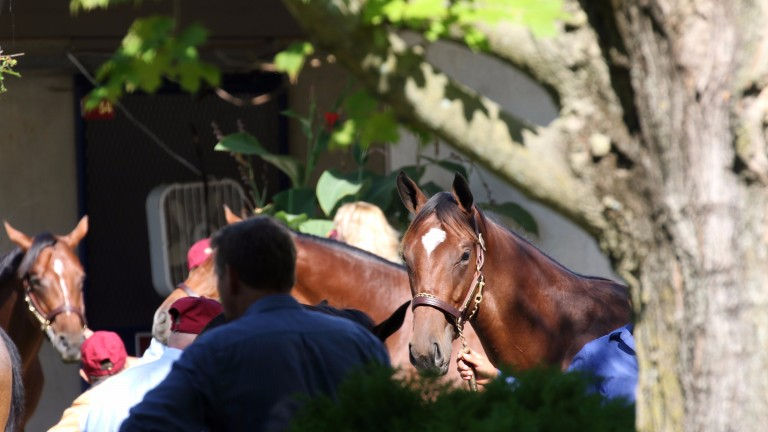 Lots under inspection at the Fasig-Tipton sales ground prior to the new sale
