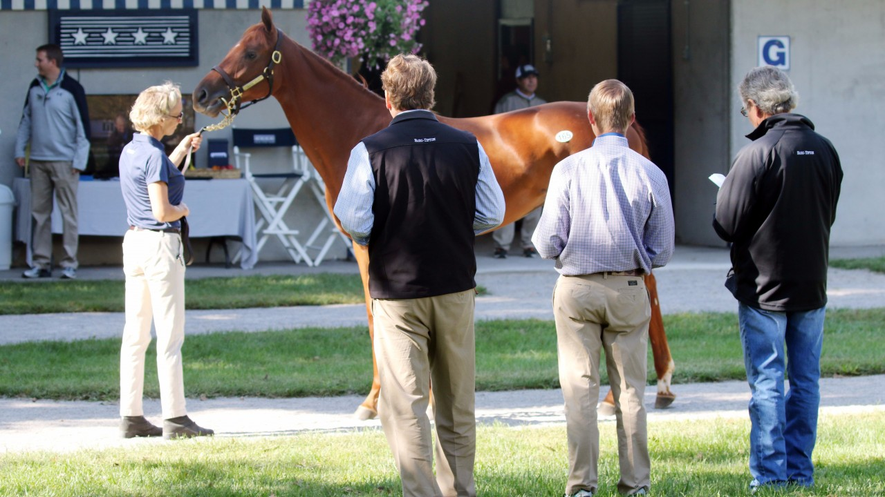 Sale experiment bids to exploit new momentum for us turf for Negative show pool horse racing