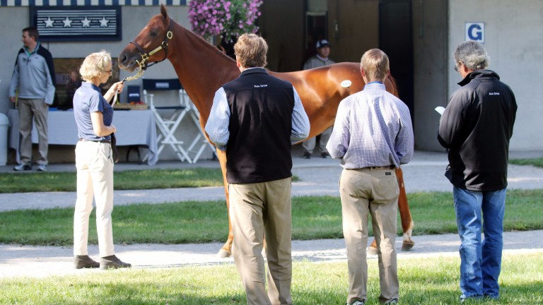 The 2017 Fasig-Tipton Turf Showcase: poor response sees discontinuation of auction