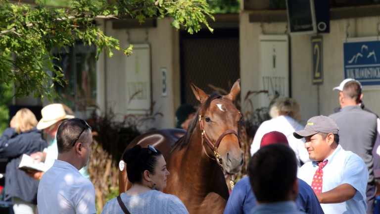 Familiar consignors' boards and busy viewing make for an encouraging picture before the sale