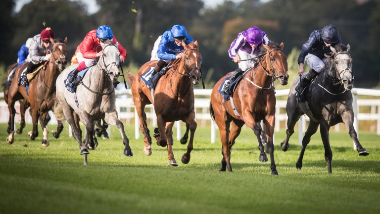 Persuasive (red silks) charges home for third in the Matron Stakes at Leopardstown