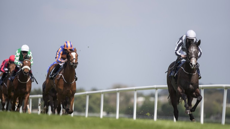 Alpha Centauri: will run at Newmarket if the ground is suitable