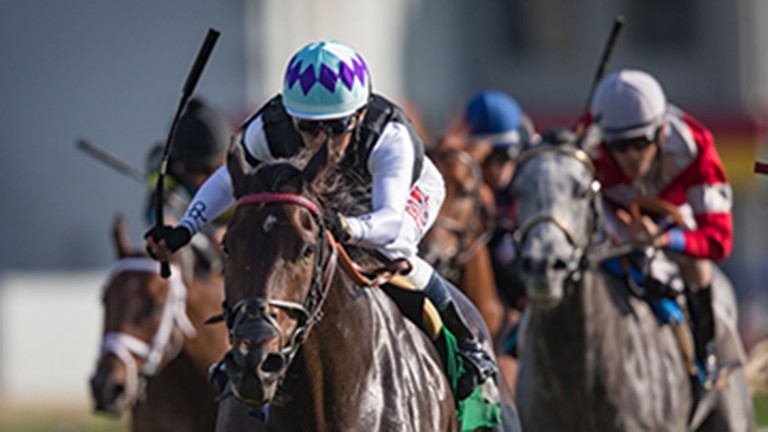 Miss Temple City: One of a number of mares to sell at Fasig-Tipton in November