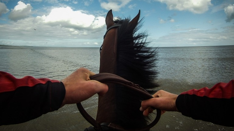 Horse and rider on the beach at Laytown