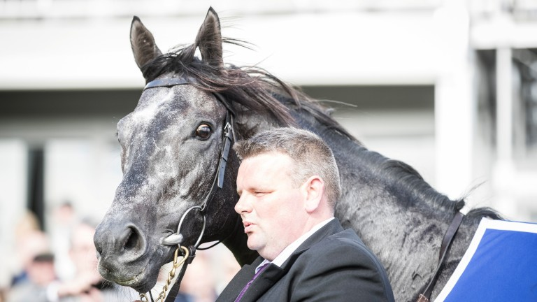 Caravaggio: dual Group 1 winner and exciting first-season sire