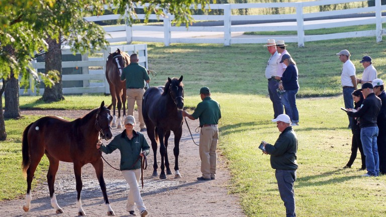 Inspections are under way at Keeneland for the world's largest yearling sale