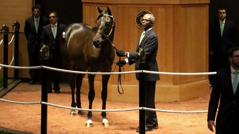This colt from Scat Daddy's last crop, out of Harbingerofthings, was one of two to share $250,000 top billing