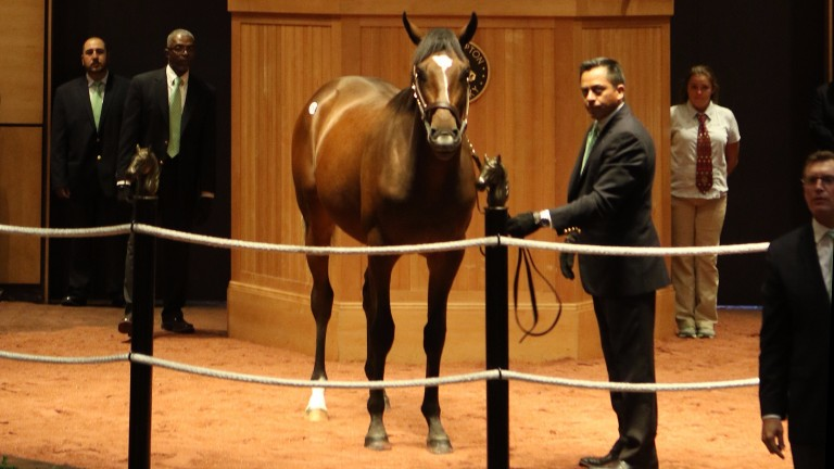 The second Scat Daddy colt to reach $250,000 is from the family of Yesterday and Quarter Moon
