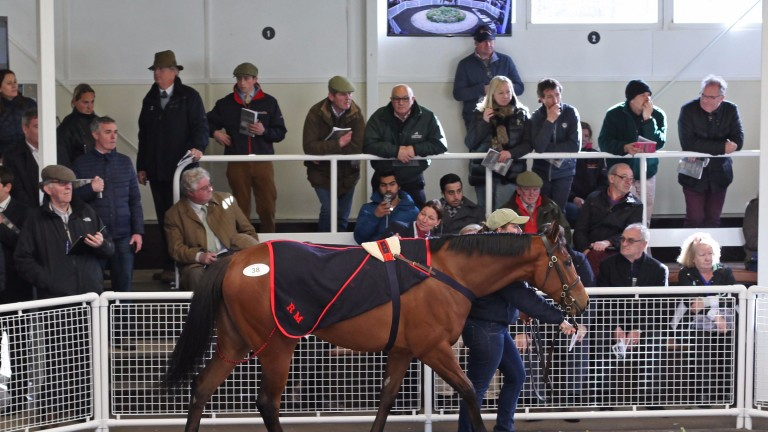 Tattersalls Ireland at Ascot: no selling on Monday