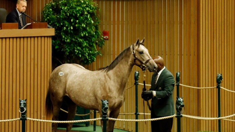 The sister to Cupid bought by MV Magnier for $2.7 million at Keeneland