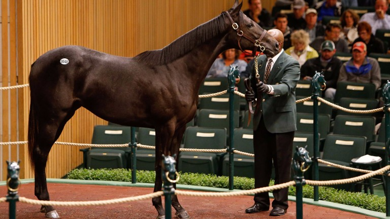 This sister to one of Scat Daddy's current European stars, Caravaggio, went to the Niarchos family on Monday for $550,000