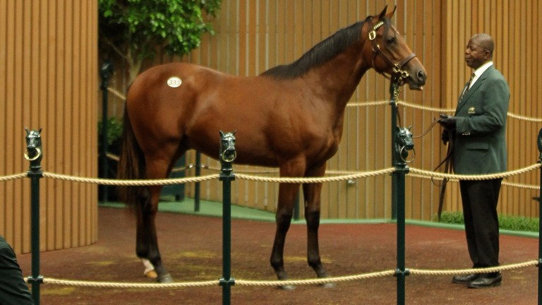 This $650,000 colt was a less surprising addition to the Godolphin stable, as a son of its own sire Dubawi