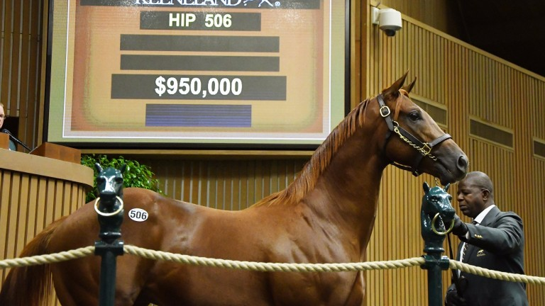 The Scat Daddy colt selling for $950,000 in the ring at Keeneland on Tuesday