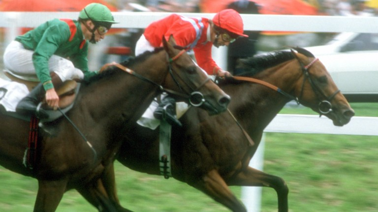 Lester Piggott and Commanche Run (right) hold off Baynoun (Steve Cauthen) to give the great rider his 28th British Classic success