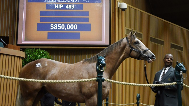 This Violence colt will be owned in partnership  by Phoenix Thoroughbreds and Three Chimneys Farm