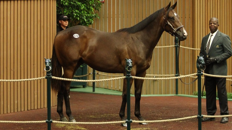 At $1.1 million, this colt sold to MV Magnier was the top Scat Daddy of the week