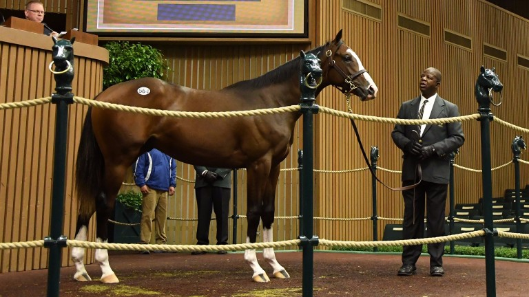 The Will Take Charge colt who raised $975,000 from the man who raced his sire