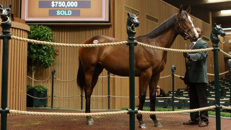 Sheikh Hamdan and his team have been busy this week and added this $750,000 War Front colt to their haul