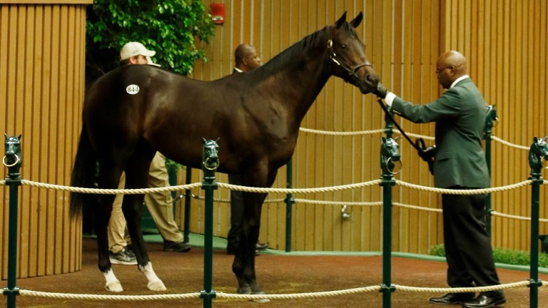 This $1 million Orb colt, acquired in partnership, is the latest seven-figure acquisition by Kerri Radcliffe