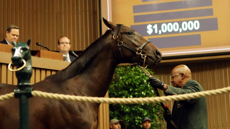 This seven-figure son of Quality Road was bought in partnership with Coolmore