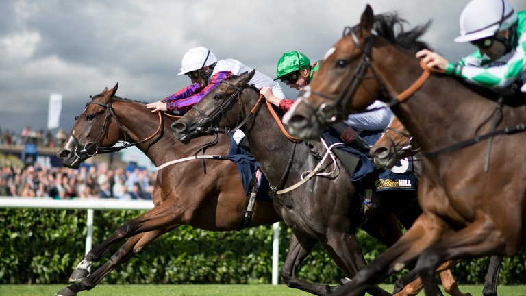 Dark Rose Angel (nearest) just losing out in May Hill thriller