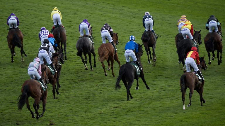 Colourful sight: the field pull up after the £300,000 sales race won by Laugh A Minute and Andrea Atzeni (yellow silks)