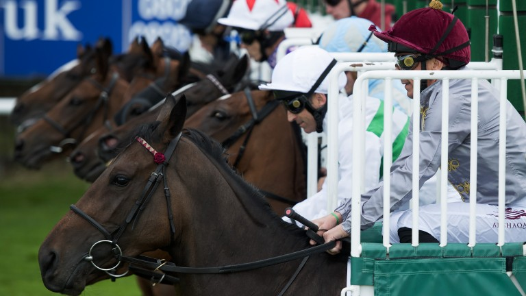 On their way: the runners in the Park Stakes won by Alyssa (white cap) break from the stalls