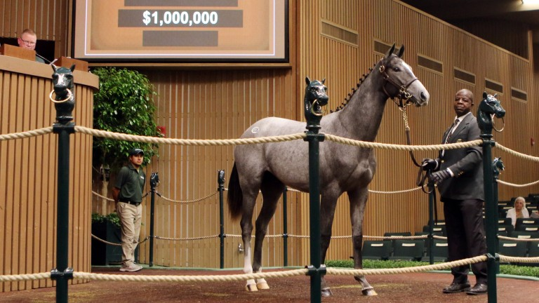 Tapit has had a remarkable week and this filly was another of his progeny to hit seven figures
