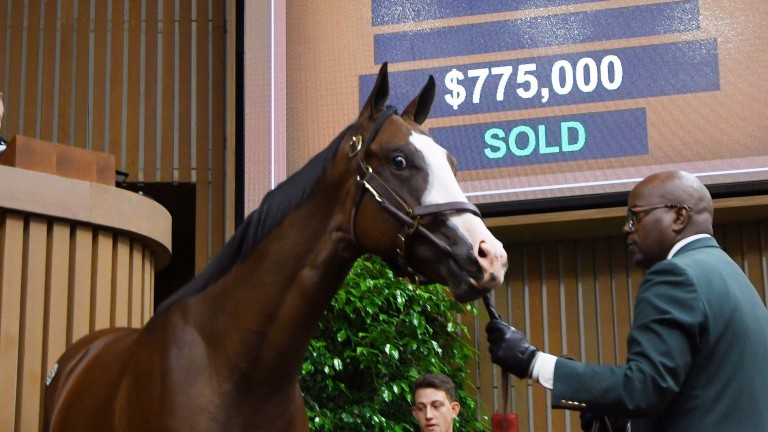 This $775,000 Pioneerof The Nile colt is Marchmont's biggest investment so far