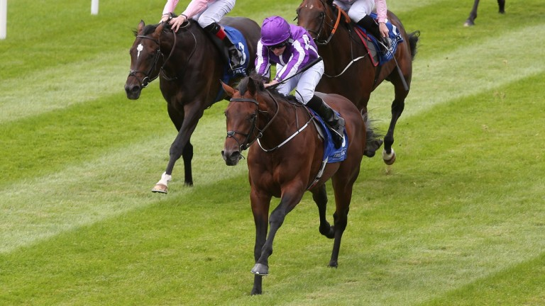 Mendelssohn, Scat daddy's $3 million sale-topper last year, is up and running with this recent success at the Curragh