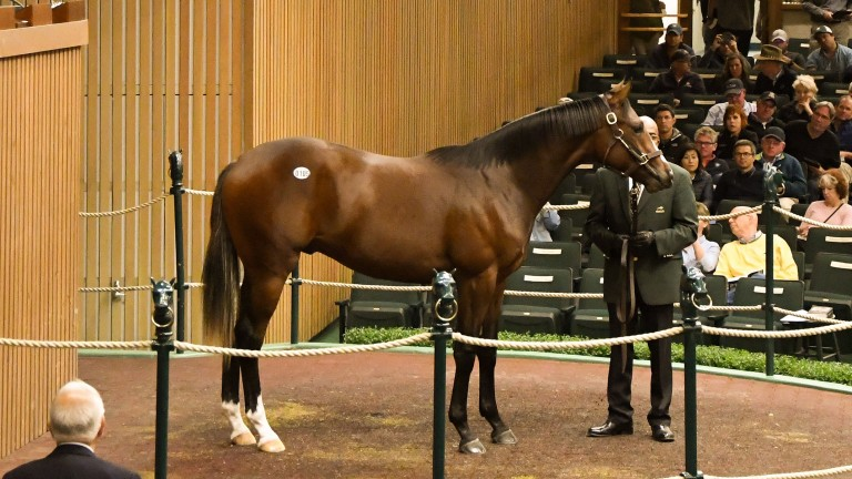This knockout Tapit colt topped Shadwell's 17 purchases at $2.5 million