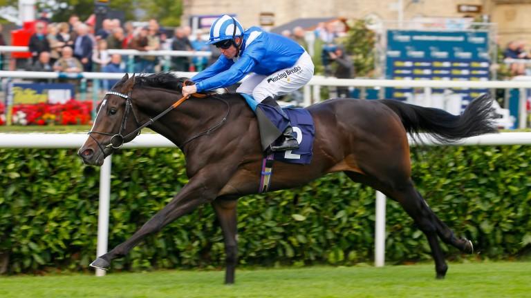 Shabaaby: the promising colt runs at Salisbury on Sunday
