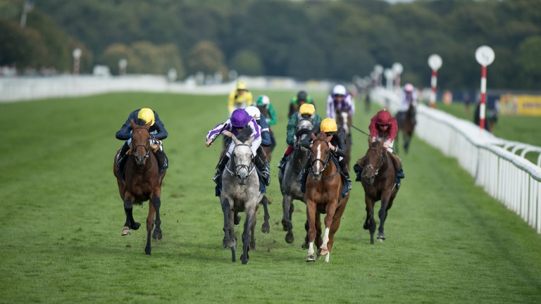 Capri (grey), one of 68 top-level winners by Galileo, lands the St Leger