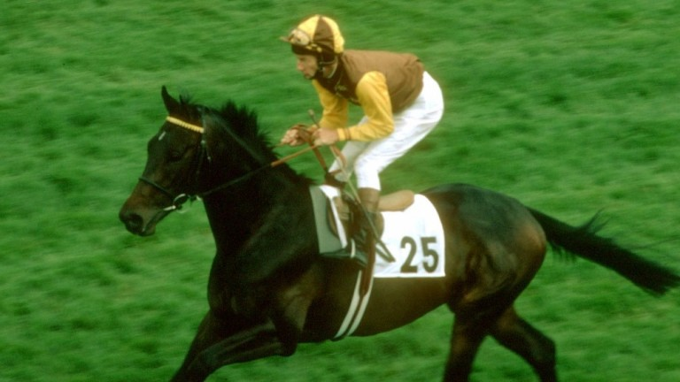 """Teenoso: described by Wragg as """"the best I ever trained"""""""