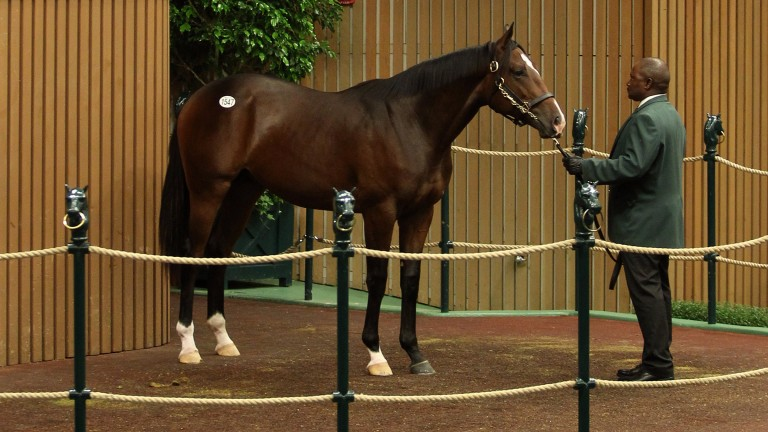 The session-topping Pioneerof the Nile colt was purchased by agent Steve Young for $525,000 from the Gainesway draft
