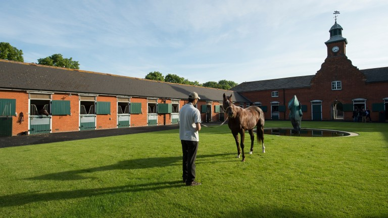 Abington Place stables in Newmarket