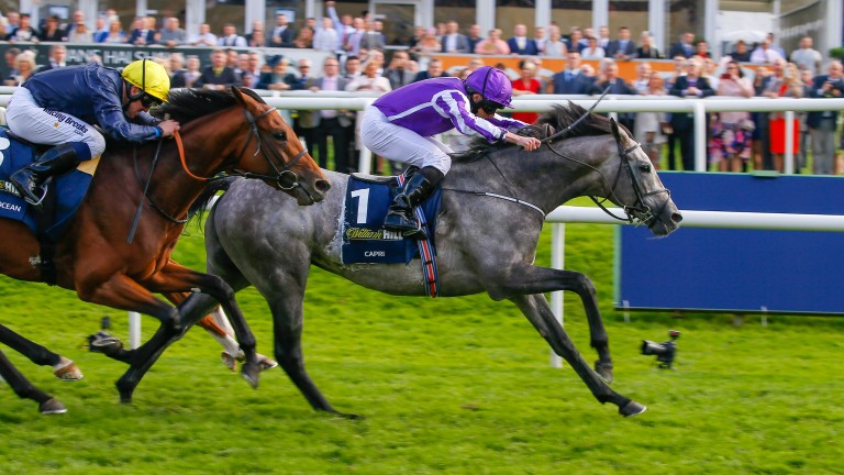 Capri: the first horse since the great Nijinsky to land both the Irish Derby and the St Leger